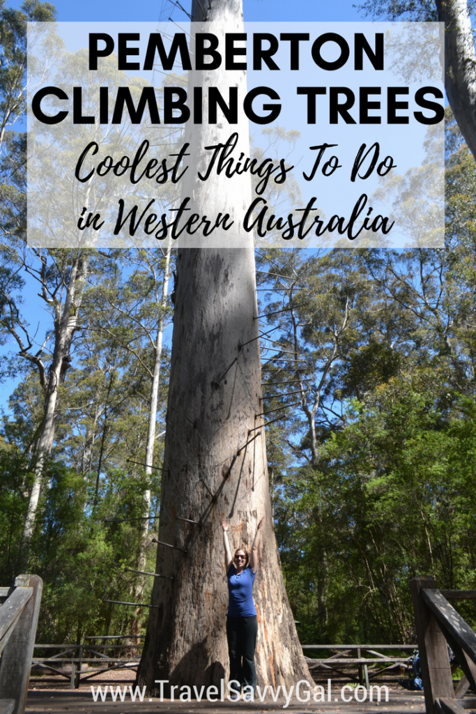 Pemberton Climbing Trees Coolest Things to Do in Western Australia