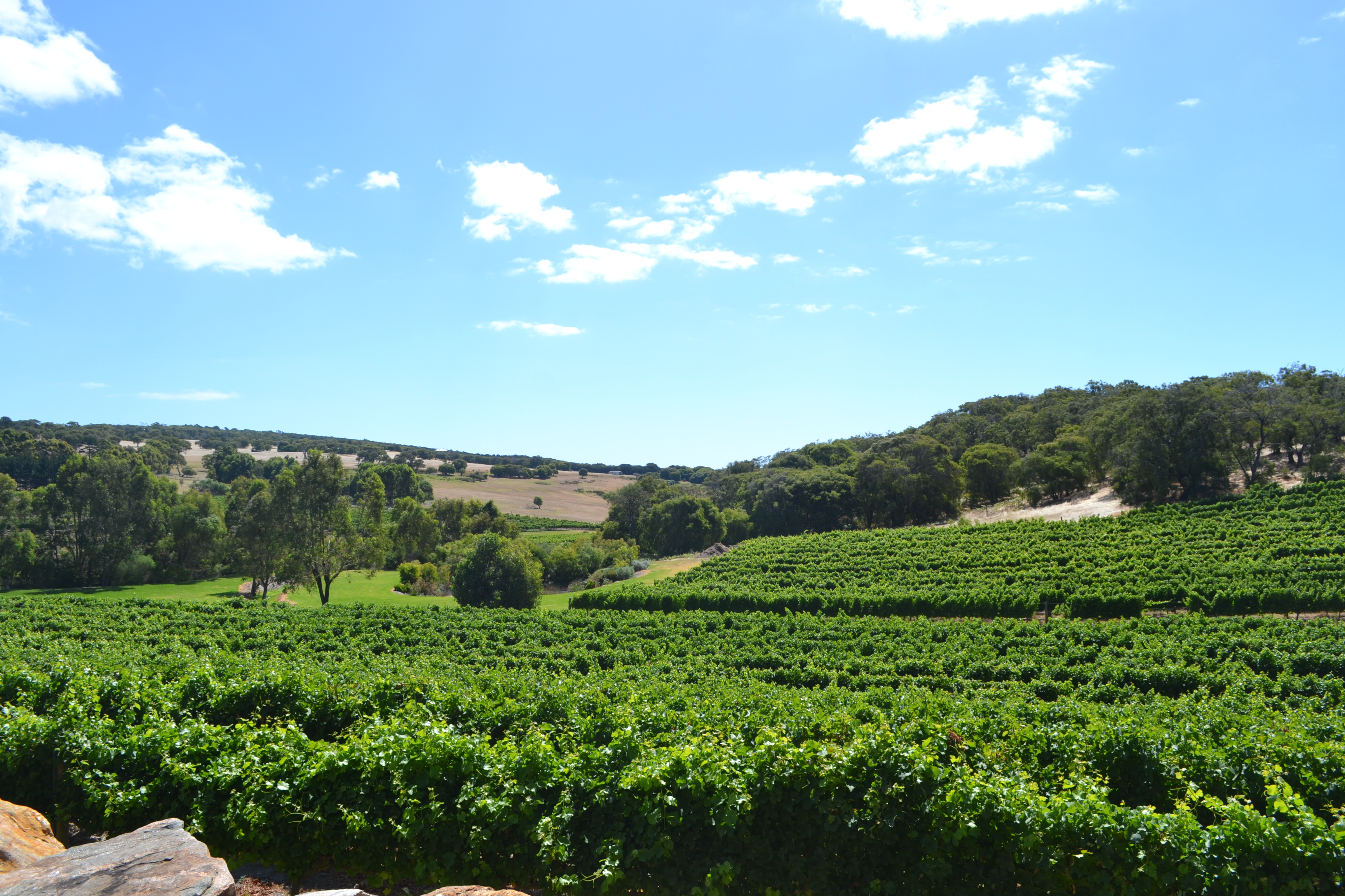 Cape Naturaliste Vineyards, winner of some prestigious awards that we don't remember the name of...