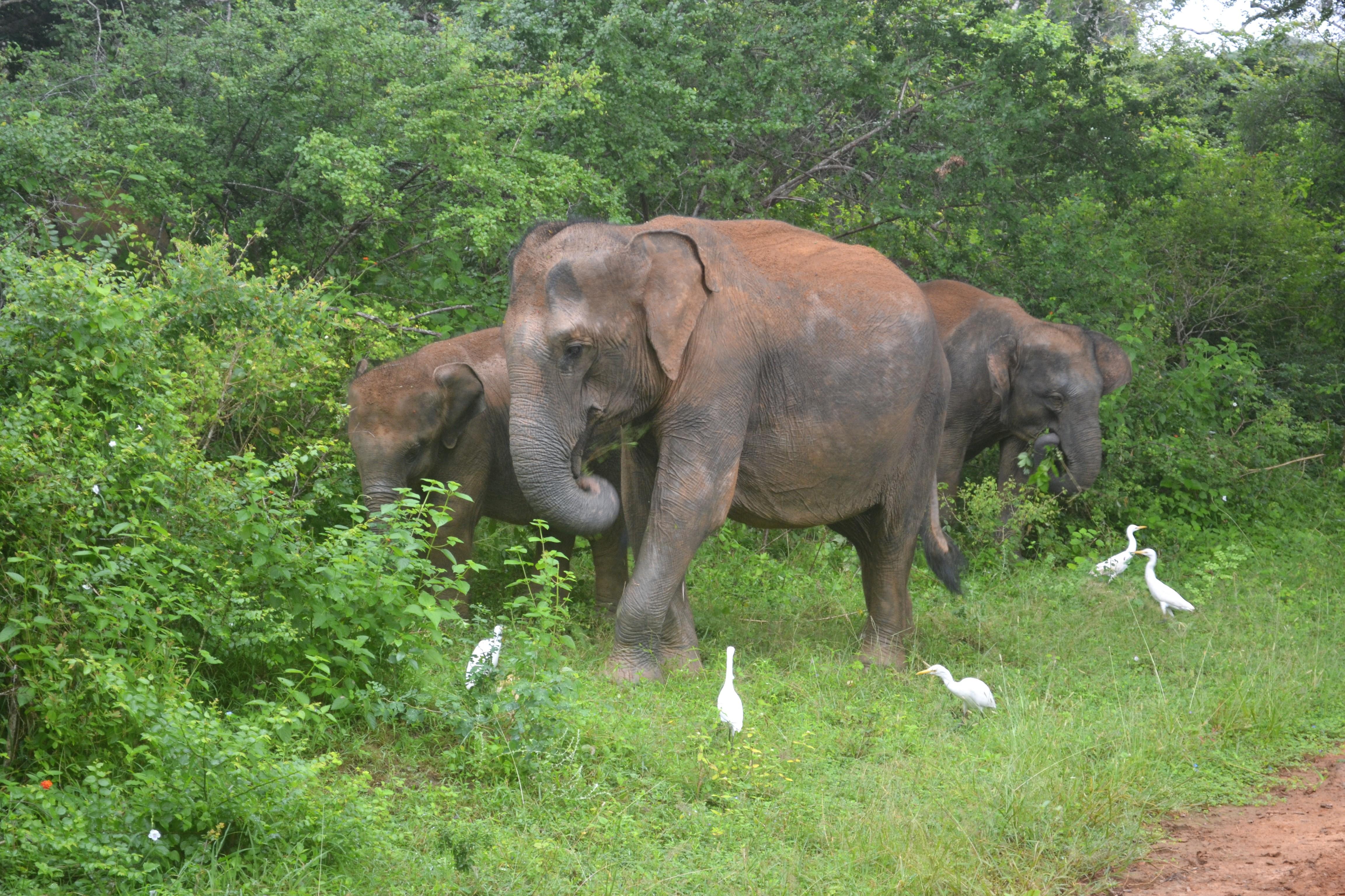 safari DSC_0859 (2)