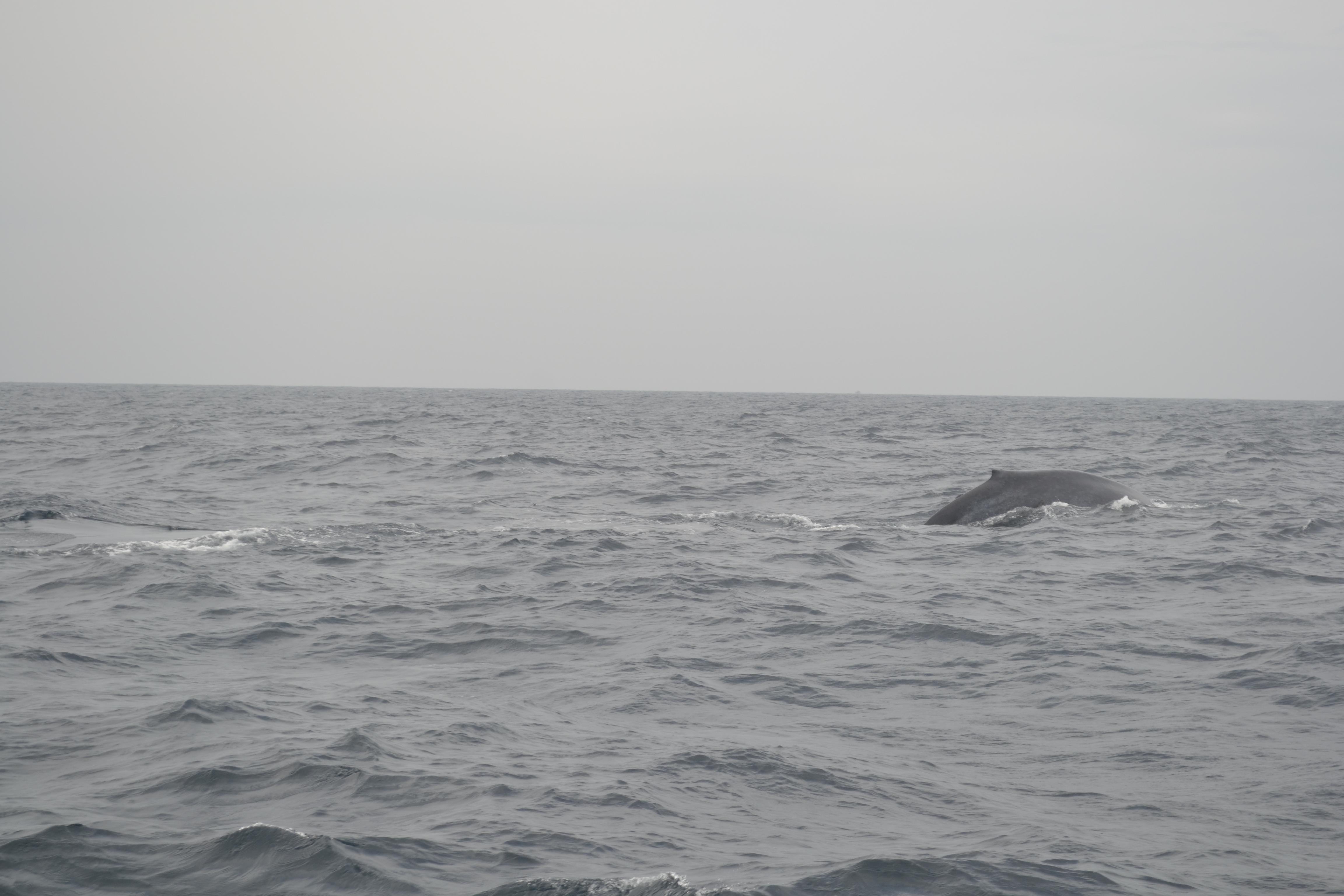 whale DSC_0663