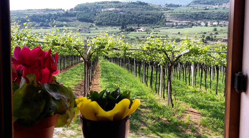 Featured Valpolicella wine region Italy IMG_20170215_195445_604