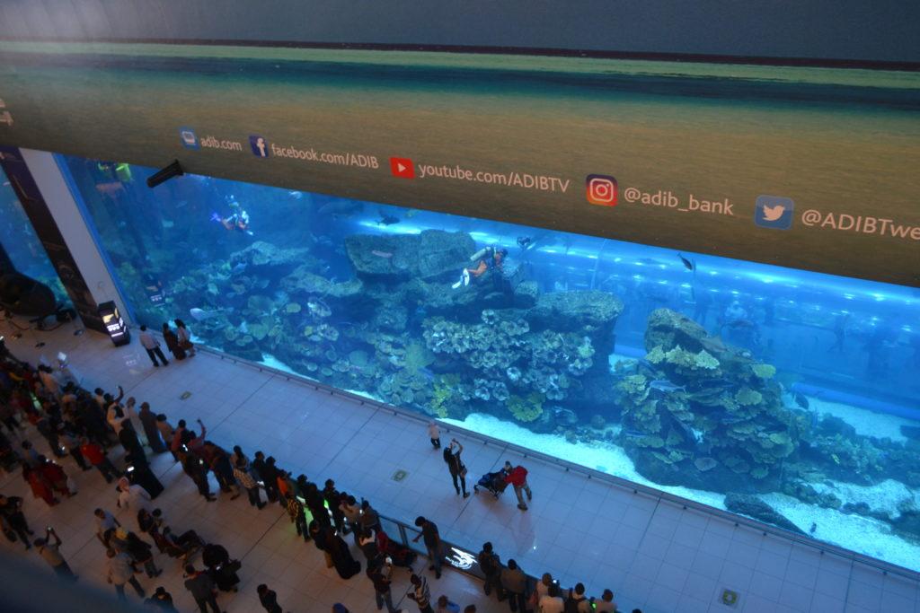 Aquarium Dubai Mall UAE DSC_0798