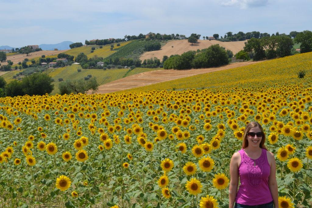 Sunflowers Le Marche Italy DSC_0327
