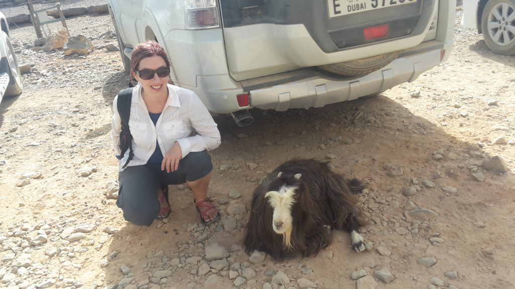 Animal Sightings Top Reasons Road Trip Oman 20161207_125318