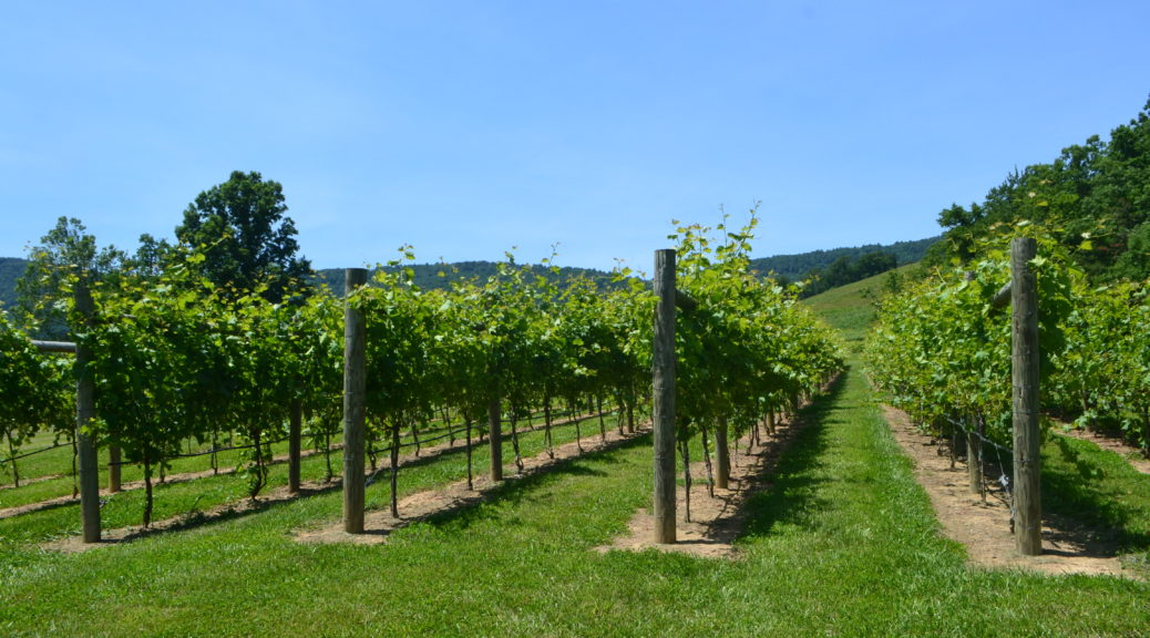 Featured Vineyards Best Charlottesville VA Wineries DSC_0826