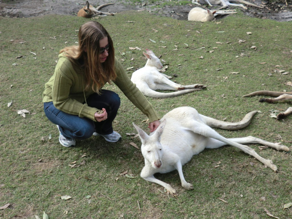Albino kangaroos 10 Things to Know About Kangaroos Before You Visit Australia CIMG1194