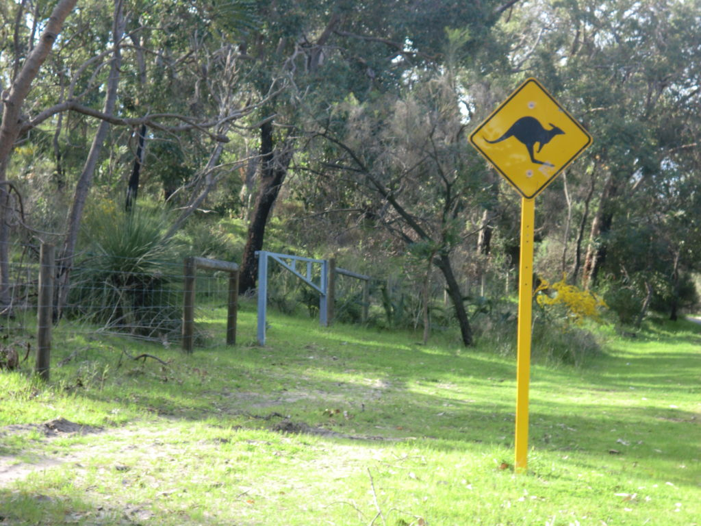 Kangaroo Crossing CIMG1516
